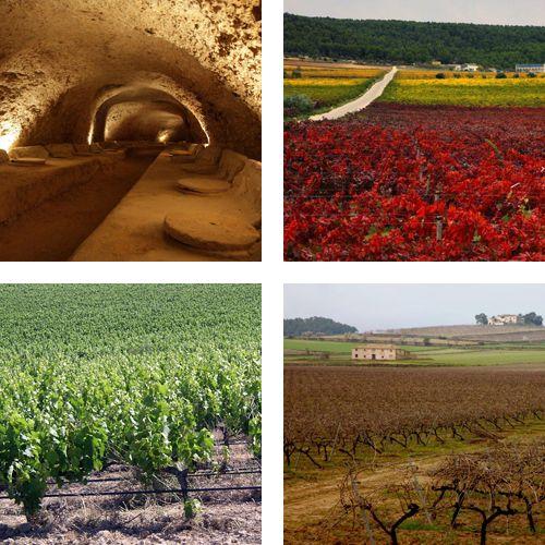 Vi i paisatge: Els Alforins