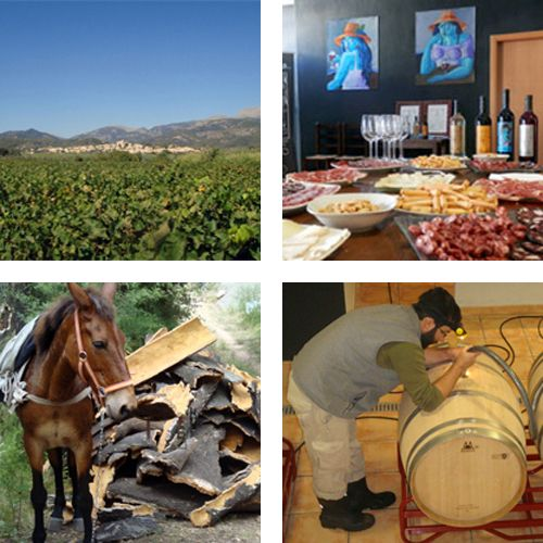 vi i paisatge - espadà