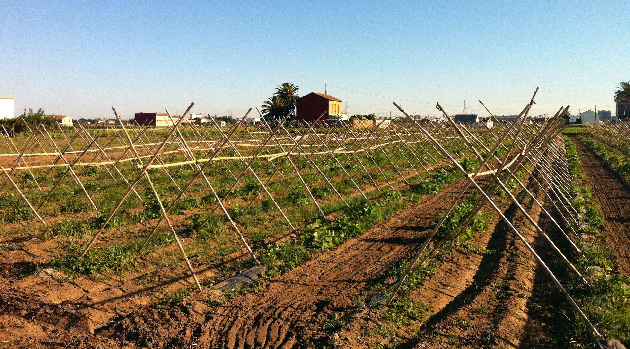 Qu es la huerta de valencia horta viva for Empresas de pladur en valencia