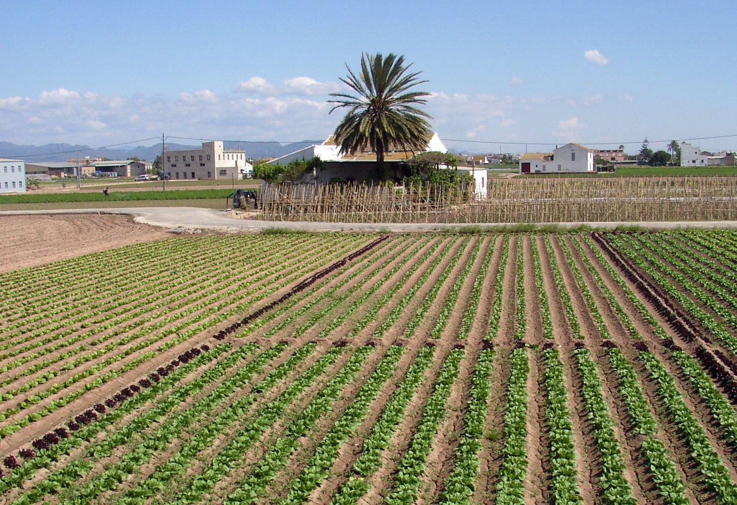 Valencian orchard